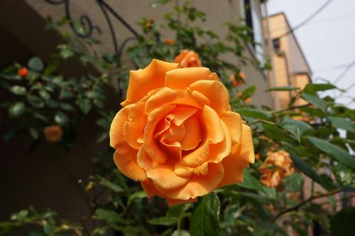 2012_0517_084516ts_2