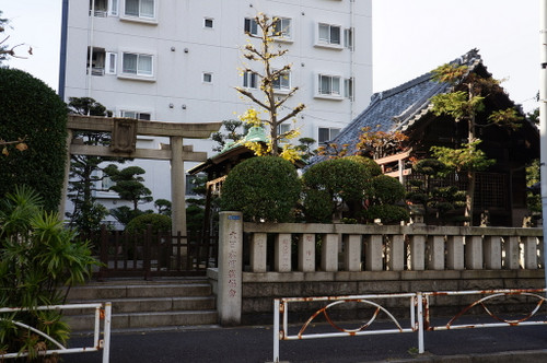 日馬富士公平の画像 p1_24